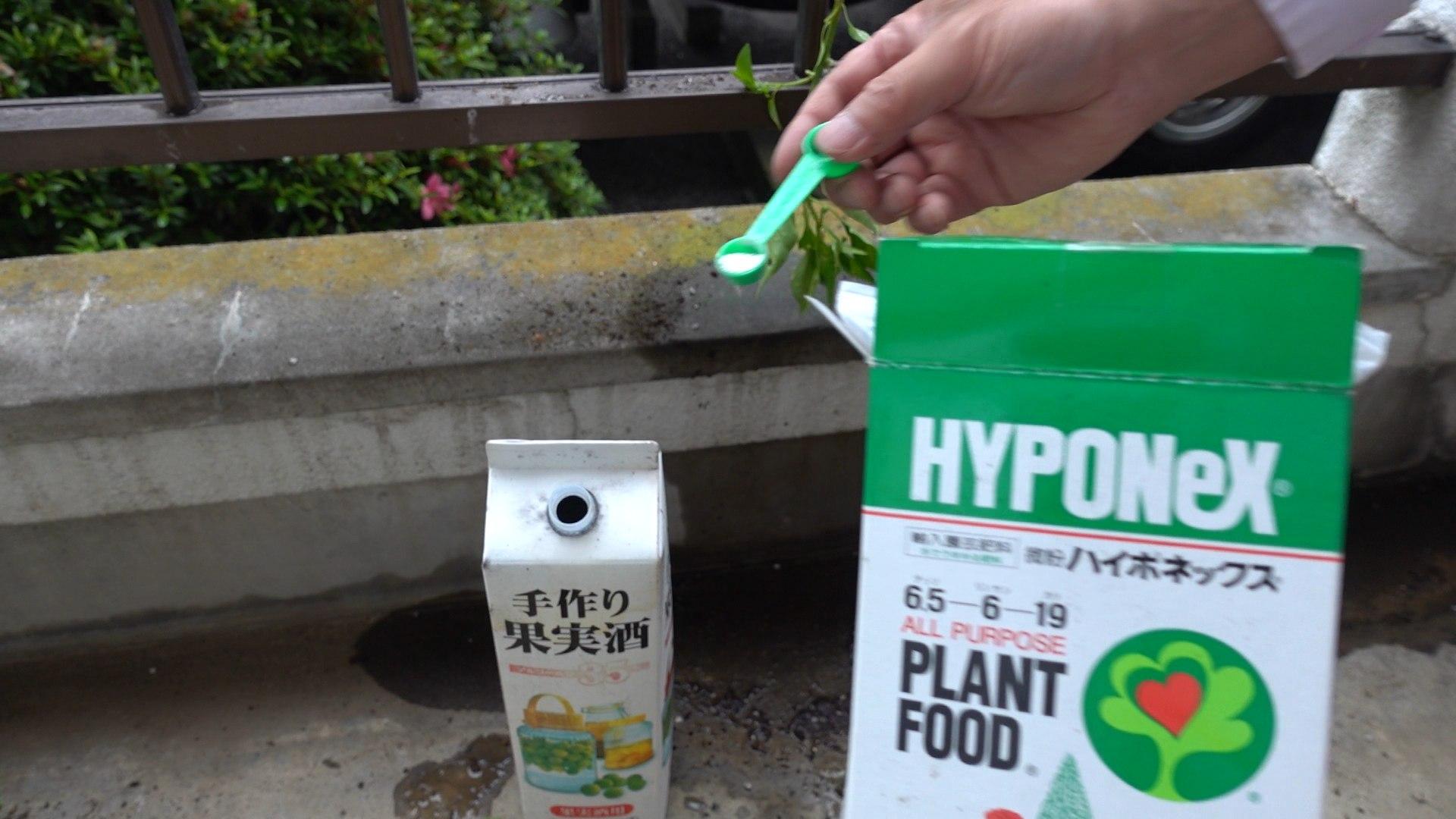 液肥は微粉ハイポネックスを1000倍で